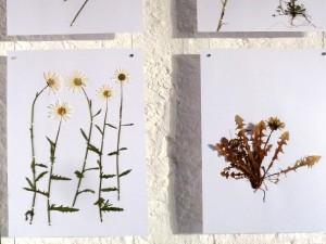 Detailansicht – Herbarium der Sehnsucht