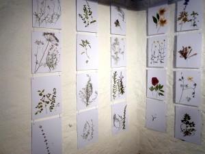 Aus der Ausstellung Herbarium der Sehnsucht