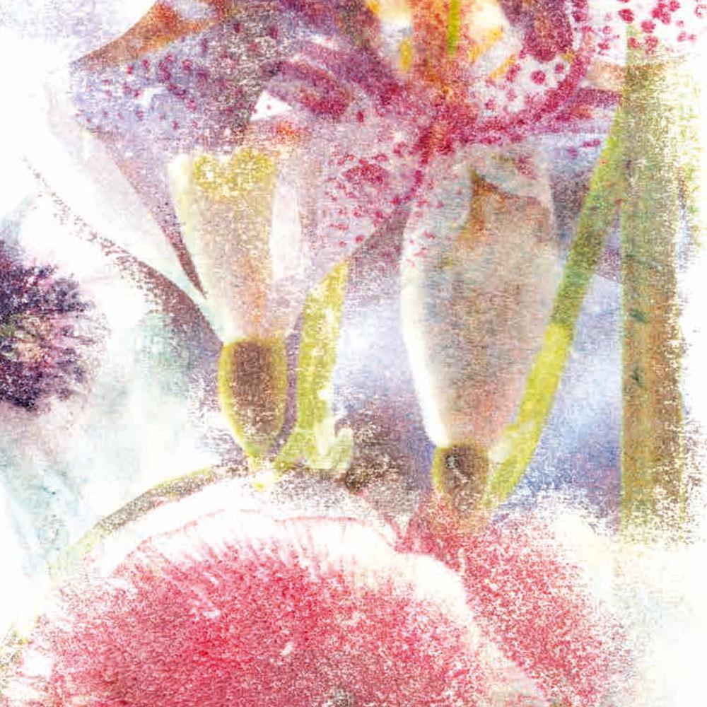 Ein Blick ins Herbarium der Sehnsucht von Maria Josefa Lichtsteiner