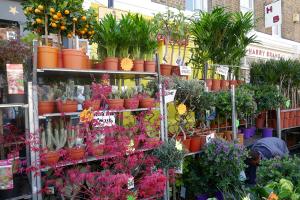 Columbia Road Flower Market_12