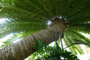 Kew Garden_12