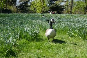 Kew Garden_2