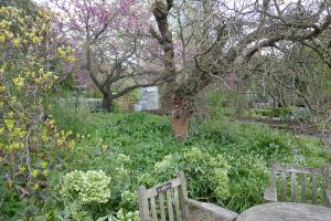 chelsea physic garden_15