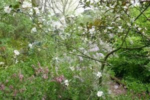 chelsea physic garden_4