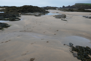 Bude to Morwenstow_7