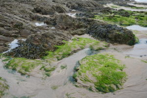 Bude to Morwenstow_8