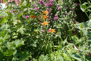 Cable Street Community Gardens_1