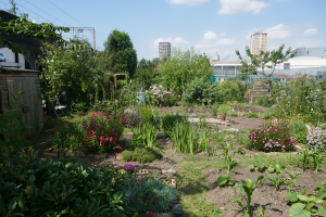 Cable Street Community Gardens_10