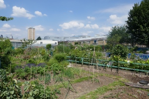 Cable Street Community Gardens_11