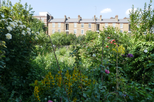 Cable Street Community Gardens_16