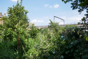Cable Street Community Gardens_18