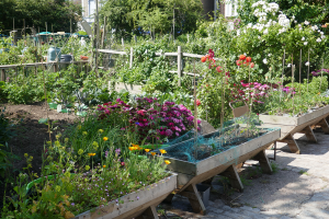 Cable Street Community Gardens_19
