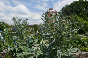 Cable Street Community Gardens_2