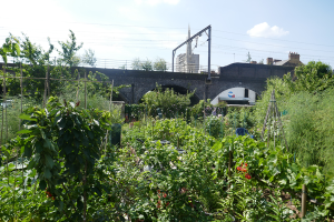 Cable Street Community Gardens_8