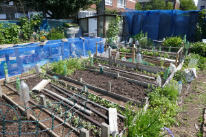 Cable Street Community Gardens_9