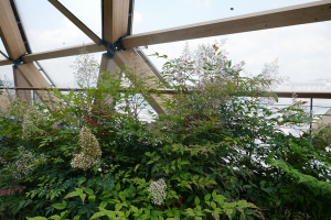 Crossrail Place Roof Garden_1