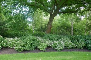 Kew Garden_13