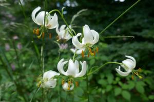 Kew Garden_19