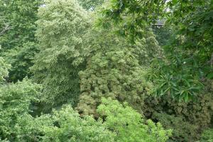 Kew Garden_9