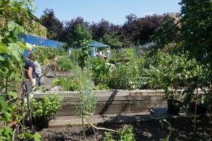 St Quintin's Community Kitchen Garden_1