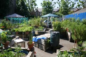 St Quintin's Community Kitchen Garden_10