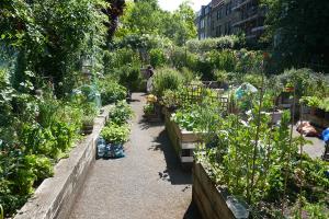 St Quintin's Community Kitchen Garden_11