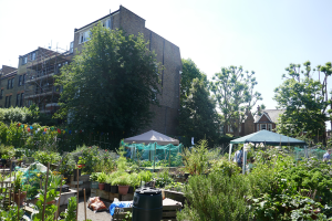St Quintin's Community Kitchen Garden_12