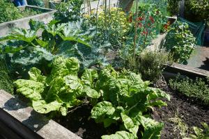 St Quintin's Community Kitchen Garden_13