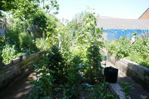 St Quintin's Community Kitchen Garden_3