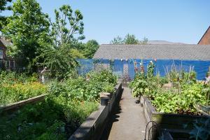 St Quintin's Community Kitchen Garden_4