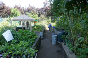 St Quintin's Community Kitchen Garden_5