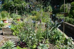 St Quintin's Community Kitchen Garden_6