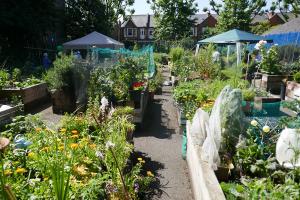 St Quintin's Community Kitchen Garden_9