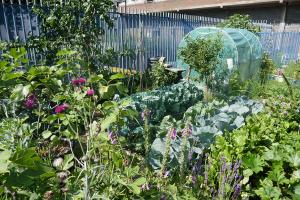 Winterton House Organic Garden_10