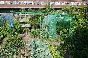 Winterton House Organic Garden_11