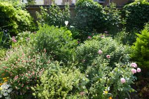Winterton House Organic Garden_18