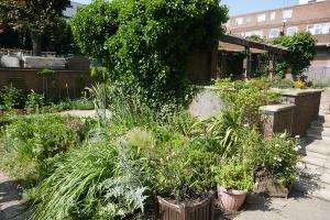 Winterton House Organic Garden_19