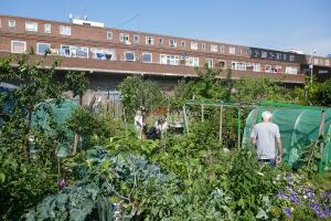Winterton House Organic Garden_4