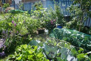 Winterton House Organic Garden_5