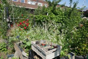Winterton House Organic Garden_6
